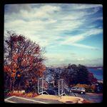 Nov13-trees-msvu-IMG_4578
